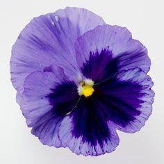 ab0756fe8808d7dfbcfffdf08d84401c--fresh-flowers-art-flowers